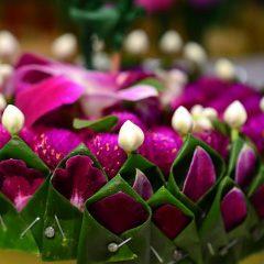 Let's celebrate Loy Krathong Festival